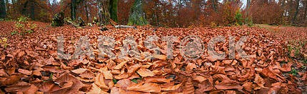 Fallen dry leaves in autumn forest