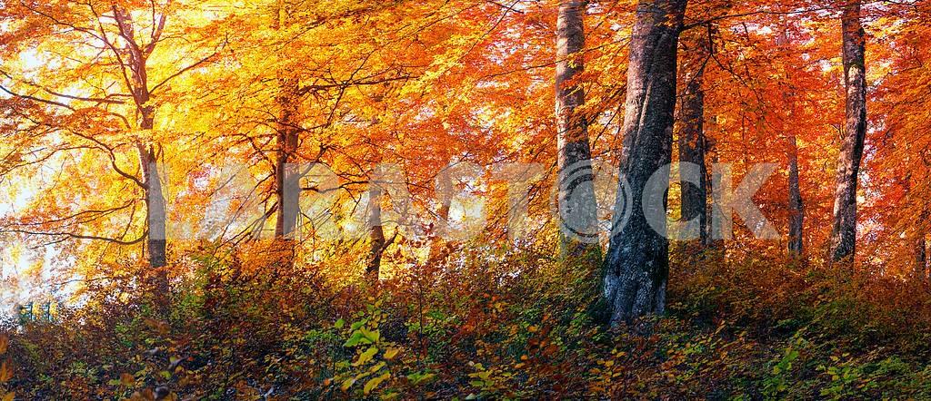 Golden alpine forests