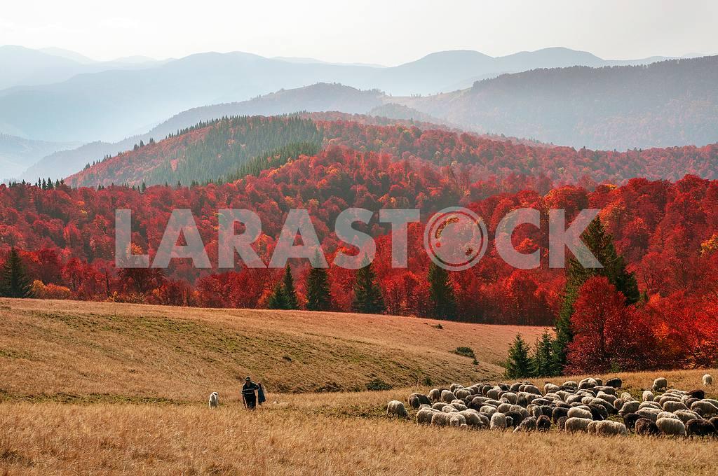 Transcarpathian pastures in autumn — Image 12849