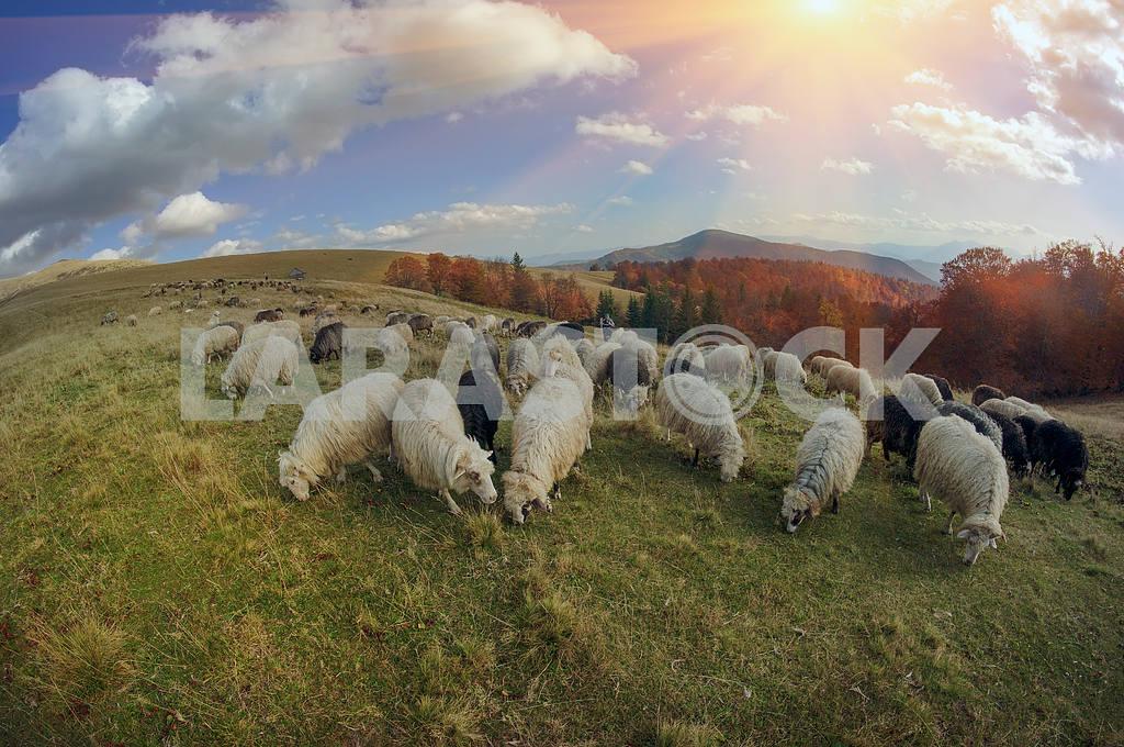 Transcarpathian pastures in autumn — Image 12866