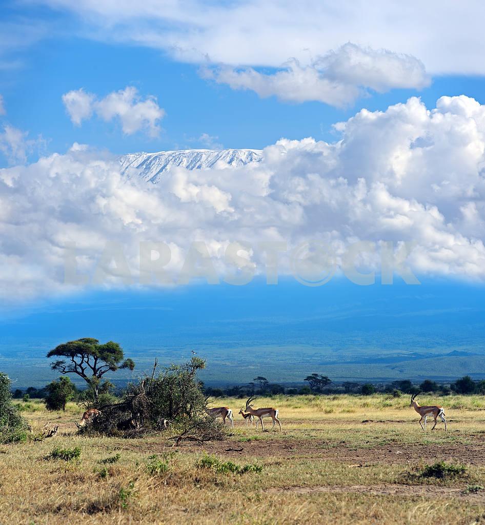 Mount Kilimanjaro — Image 1287