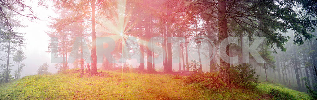Сияние туманные леса — Изображение 12939