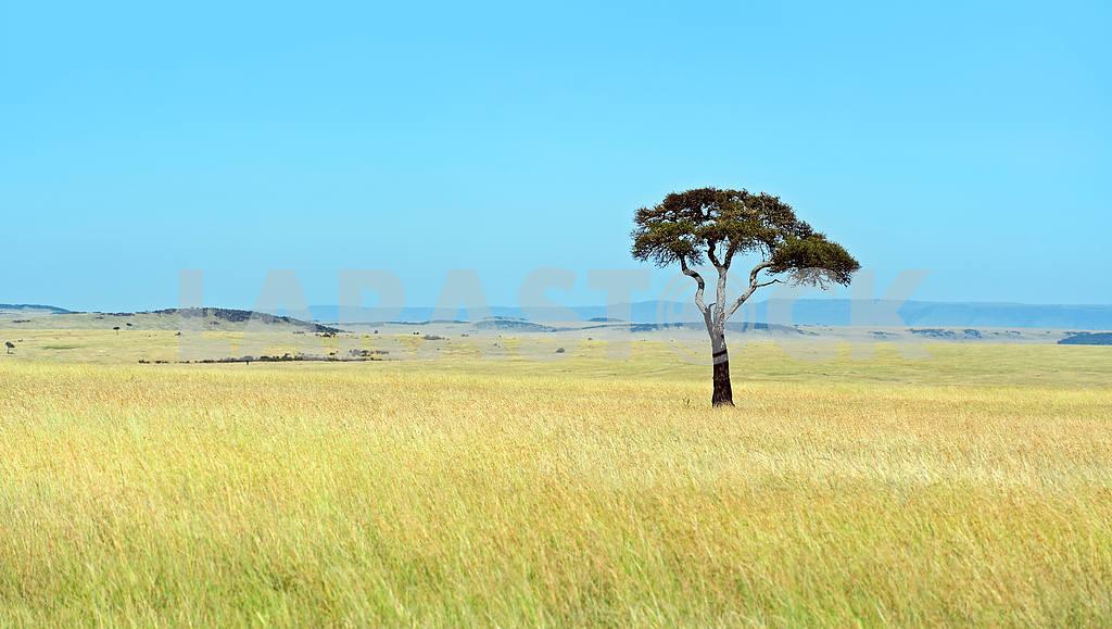 Masai Mara — Image 13143