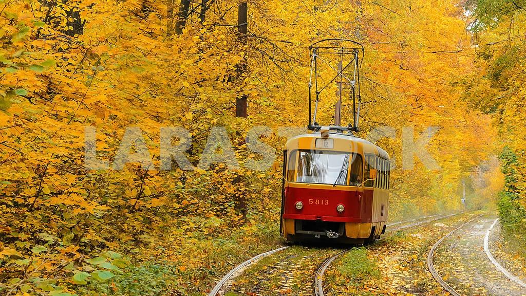 Лесная трасса трамвая в Пущу-Водицу, Киев — Изображение 1315