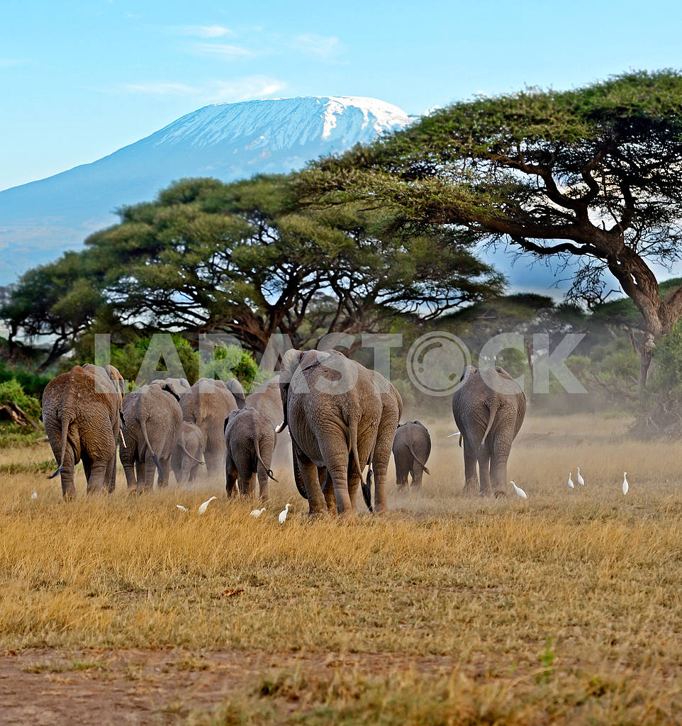 Kilimanjaro — Image 13238