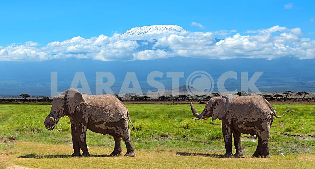Mount Kilimanjaro and two elephants — Image 13250