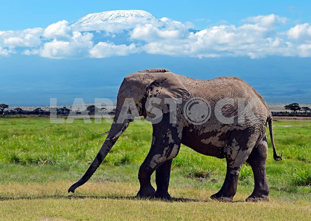 Kilimanjaro and the elephant — Image 13252
