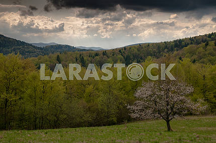 Spring in the Carpathians