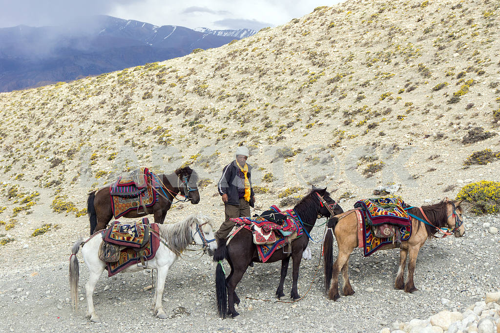 The man with the horses on a background of mountain wilderness. — Image 13611