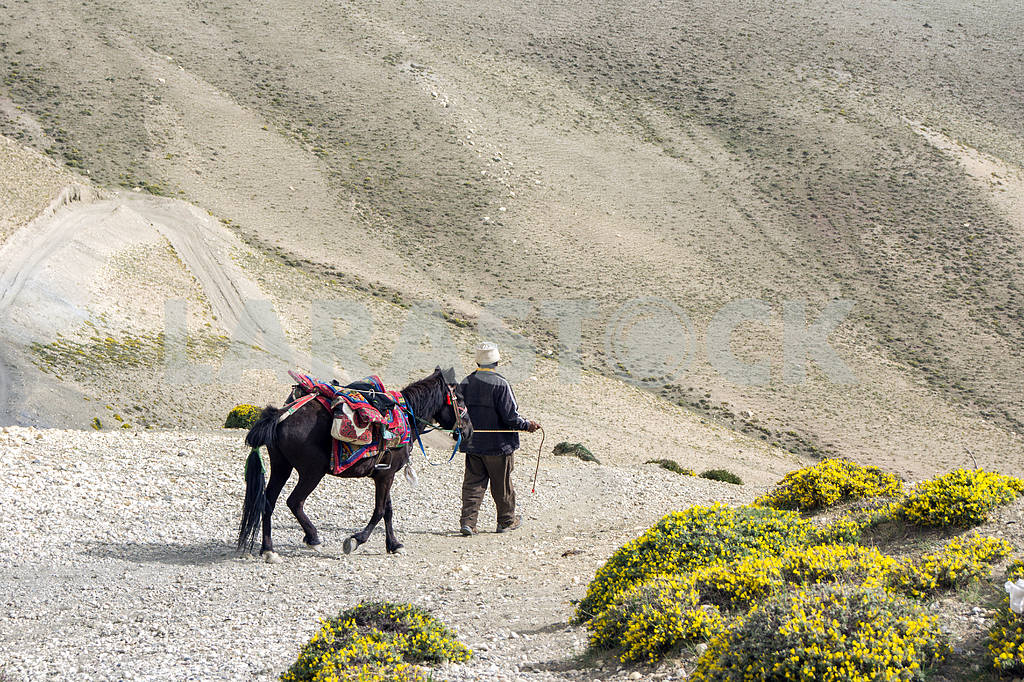 Man with a horse on a background of mountain wilderness. — Image 13612