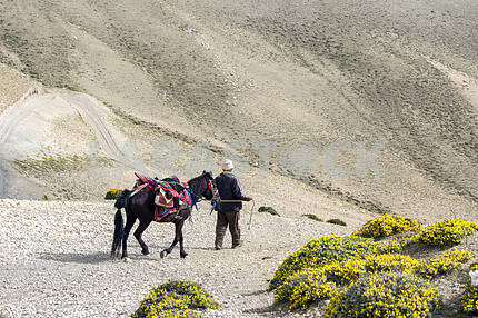 Man with a horse on a background of mountain wilderness.