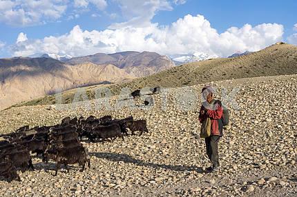 Shepherd of goats grazes