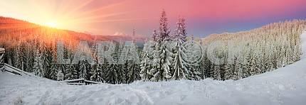 Украинские Карпаты заснеженный лес