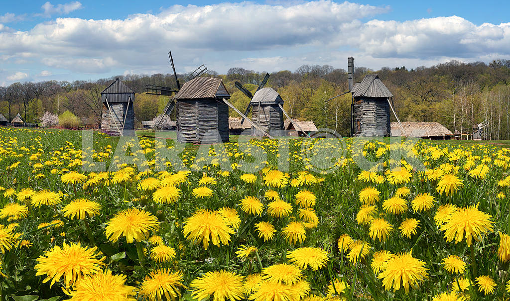 Windmills in the spring — Image 14142