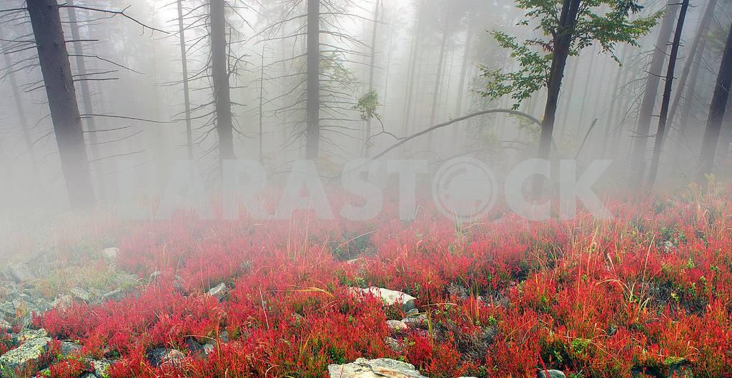 Сияние туманные леса — Изображение 1417