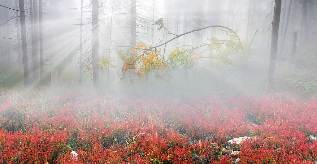 Сияние туманные леса — Изображение 1420