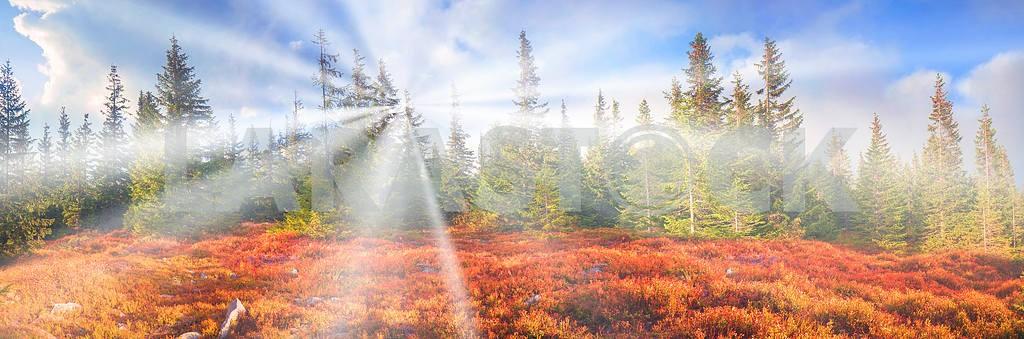 Alpine autumn in Gorgany — Image 14214