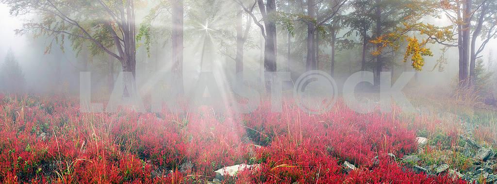 Radiance misty forest — Image 1426