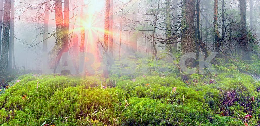 Сияние туманные леса — Изображение 1429