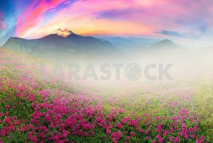 Flowering mountains of Ukraine