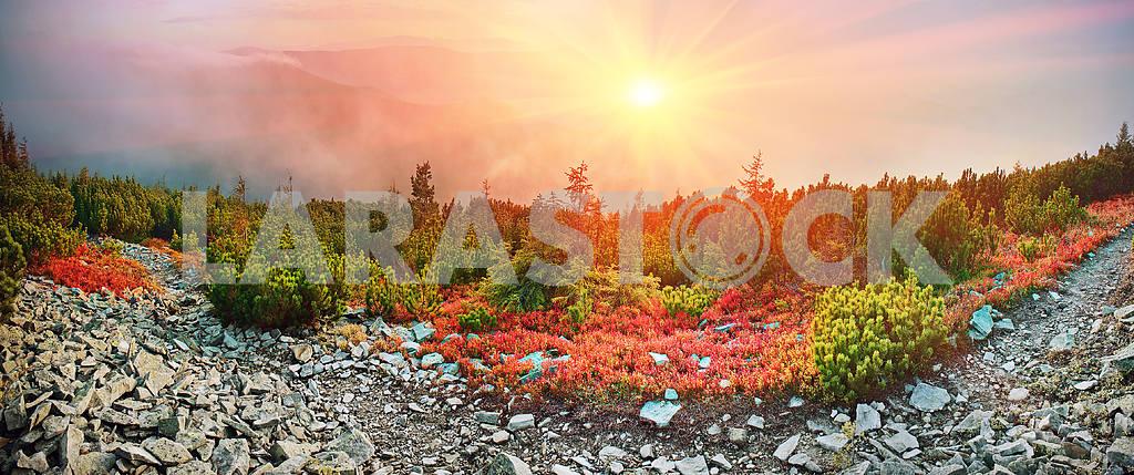 Alpine autumn in Gorgany — Image 14503