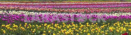 Время цветения прекрасный сад цветы тюльпаны