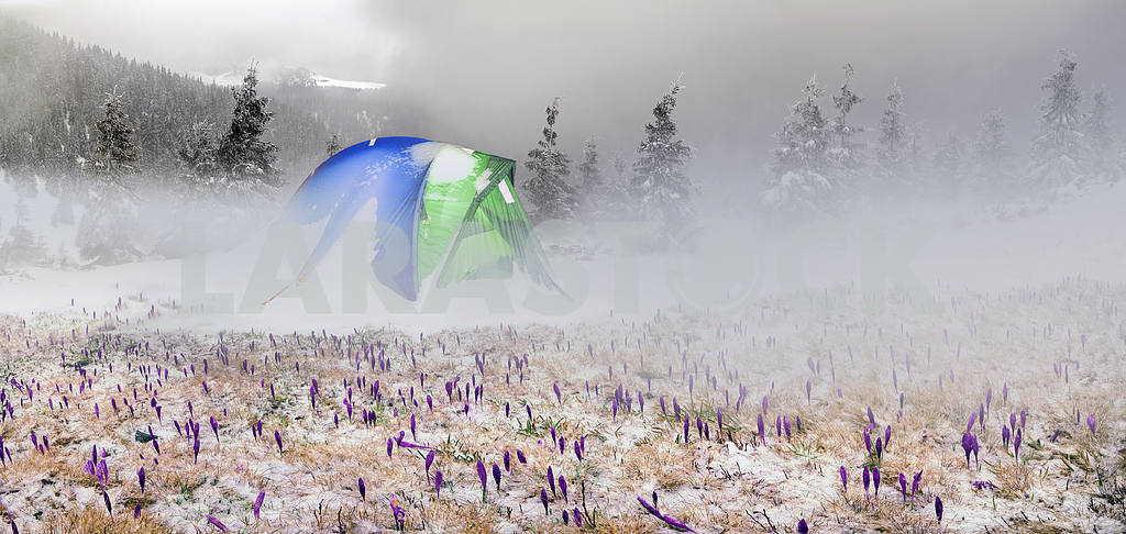Tent after the storm