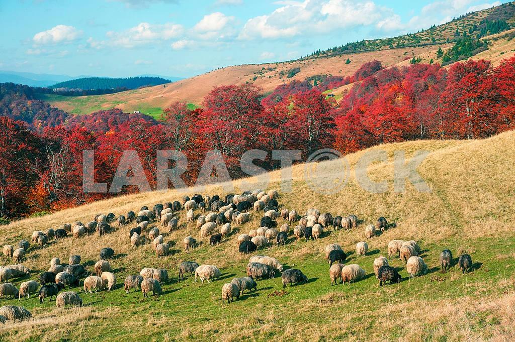 Transcarpathian pastures in autumn — Image 14698