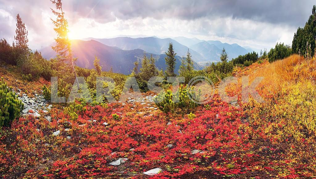 Alpine autumn in Gorgany — Image 14781