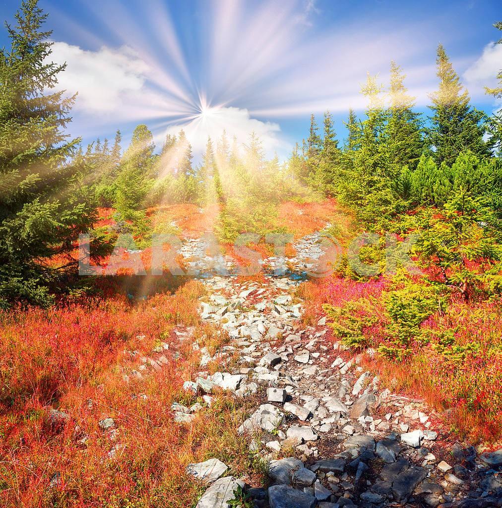 Alpine autumn in Gorgany — Image 14784