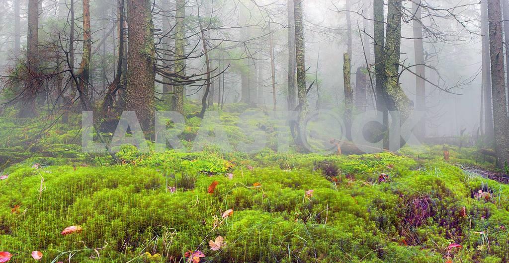 Сияние туманные леса — Изображение 14808