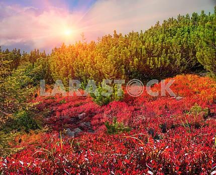 Blueberry blanket of autumn