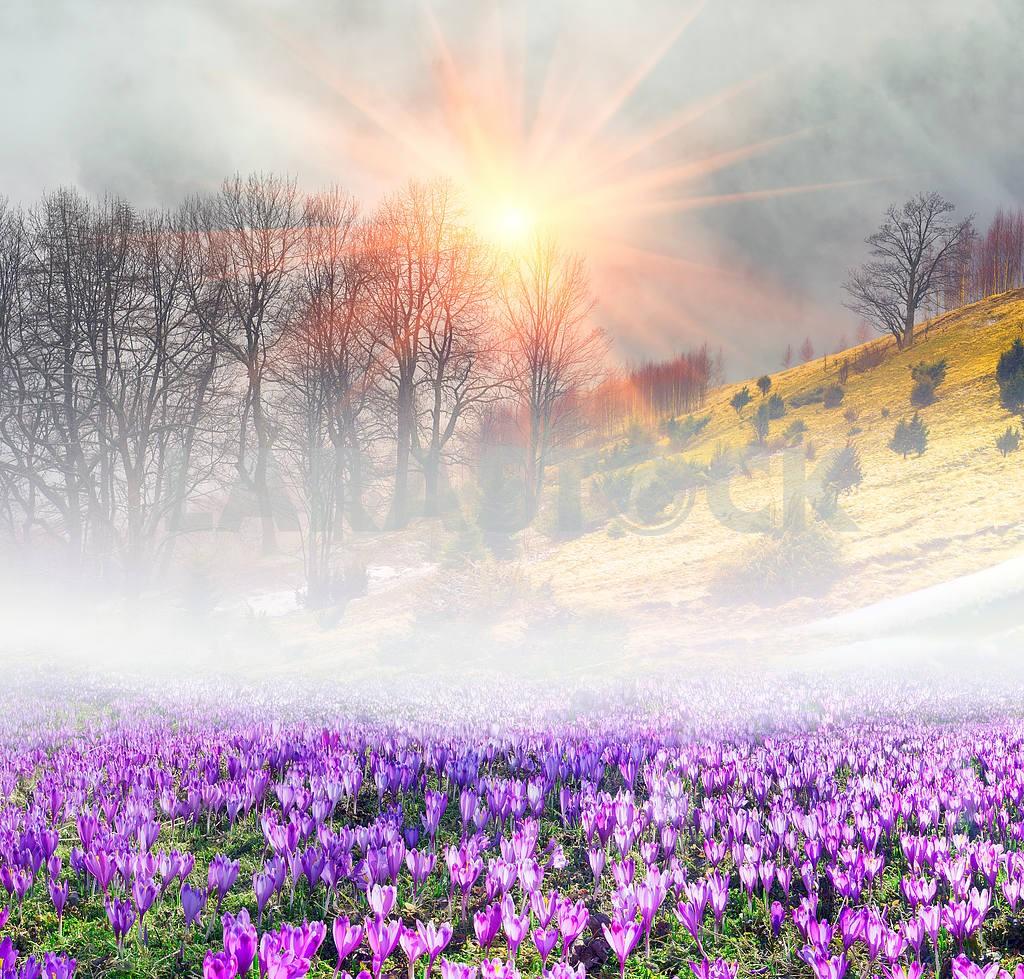 Saffron in the fog — Image 14854