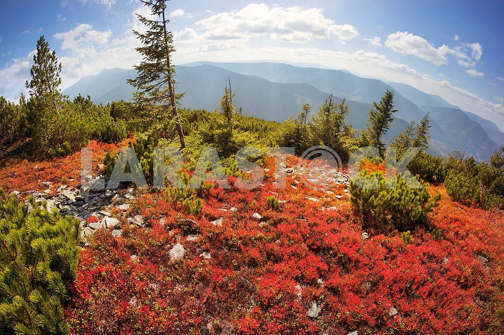 Alpine autumn in Gorgany — Image 15019