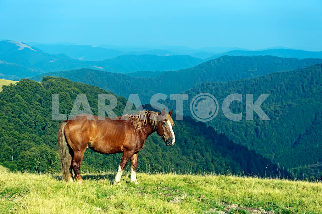 Horse on a background of mountain — Image 1537