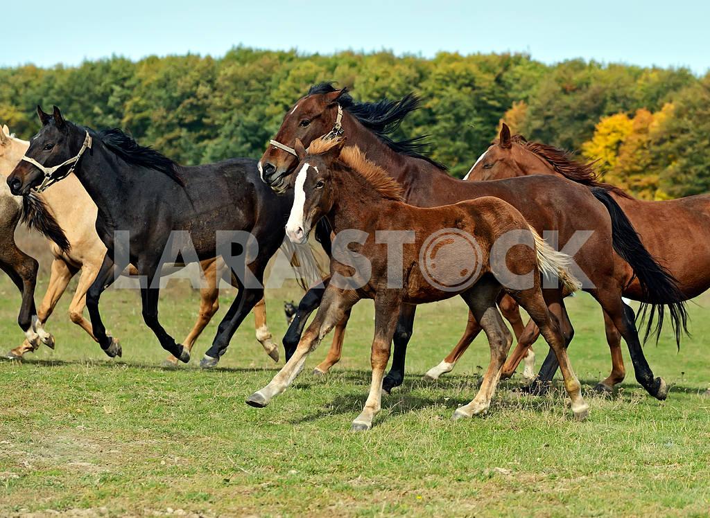 Horse — Image 1539