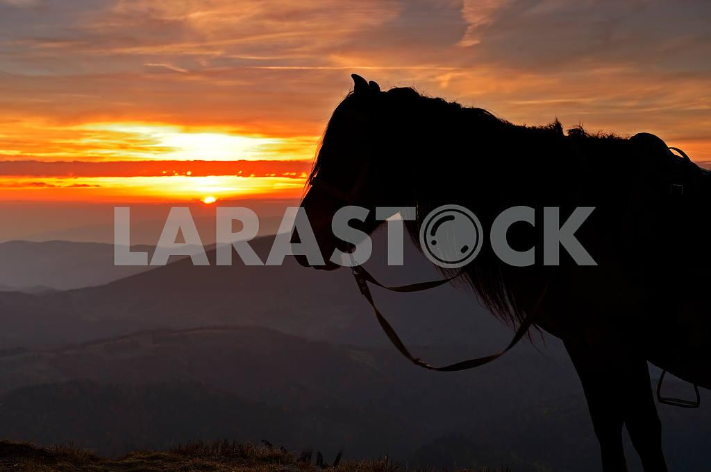 Horse — Image 1542