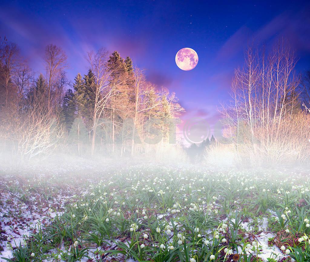 Подснежники ночь — Изображение 15475