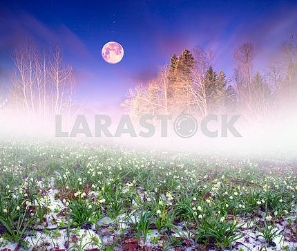 Snowdrops night