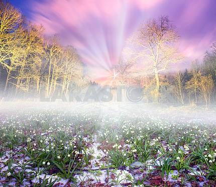 Snowdrops night