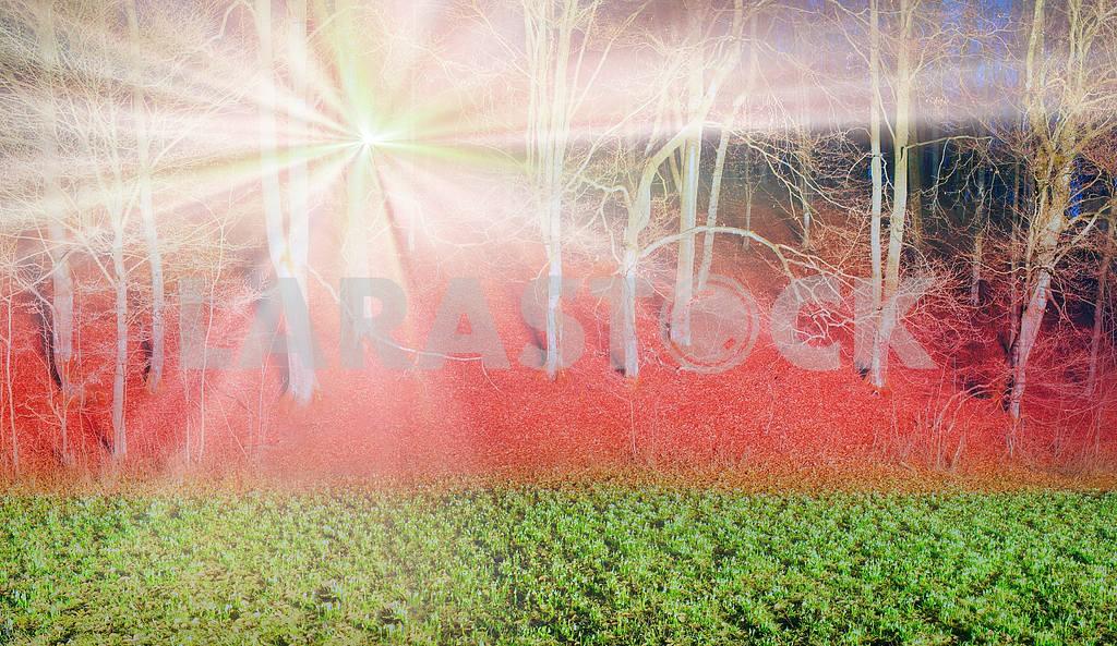 Подснежники ночь — Изображение 15503
