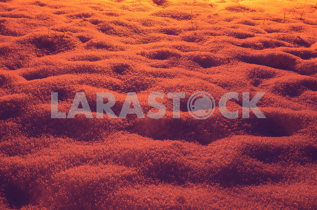 Picturesque sunset glow — Image 15782