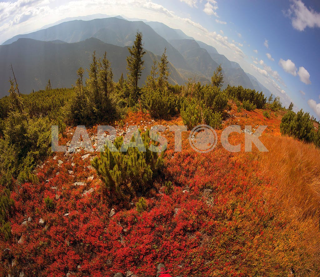 Alpine autumn in Gorgany — Image 15819
