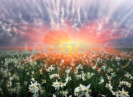 Цветок Долина