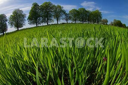Field of spring greens