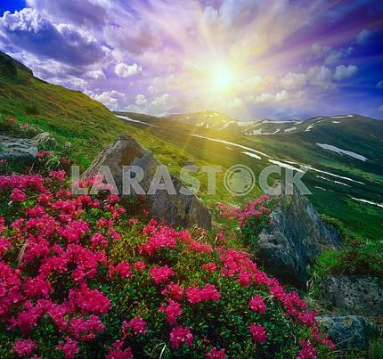 Цветы , снег и скалы