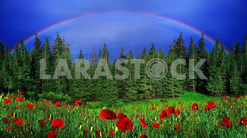 Rainbow-arc — Image 15982
