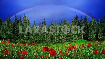 Rainbow-arc