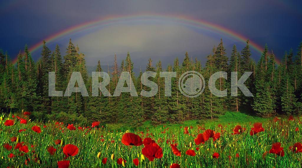 Rainbow-arc — Image 15983