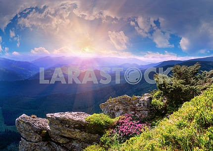 Rhododendrons of Carpathians